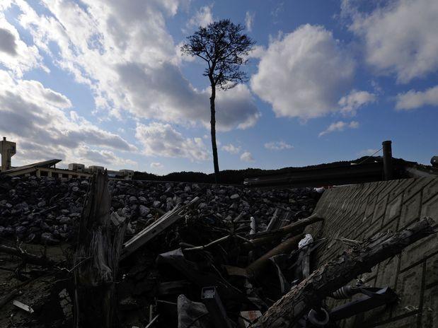 Pinheiro do Milagre Tsunami Japão